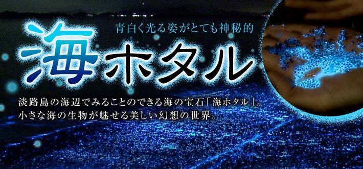 青白く光る姿がとても神秘的「海ホタル」