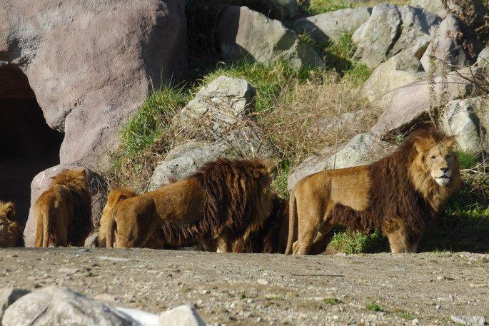 北九州自然動物公園アフリカンサファリ