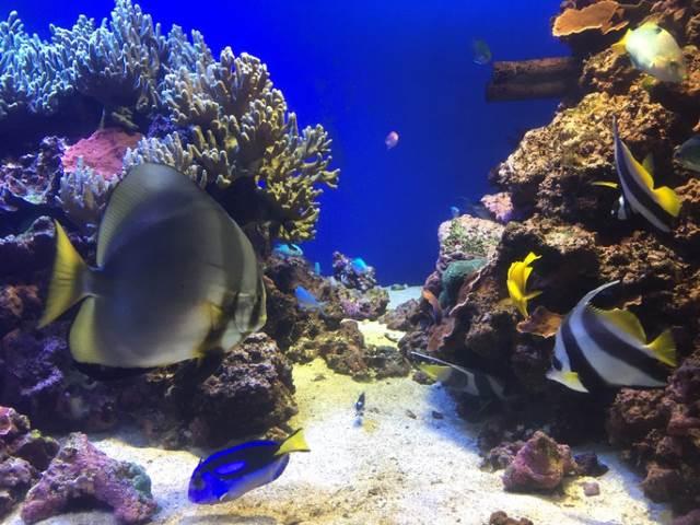 鳥羽水族館/魚