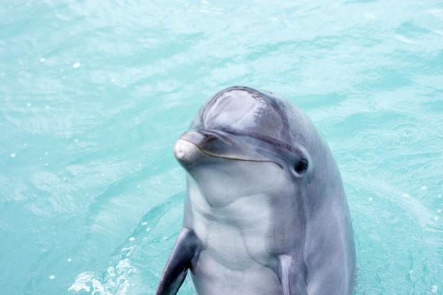 かわいすぎて、どうしよう!キュートでかしこいイルカの生態 : THE ...