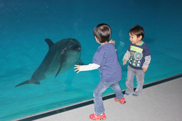 イルカと仲良くなるためのオススメの遊び方って?