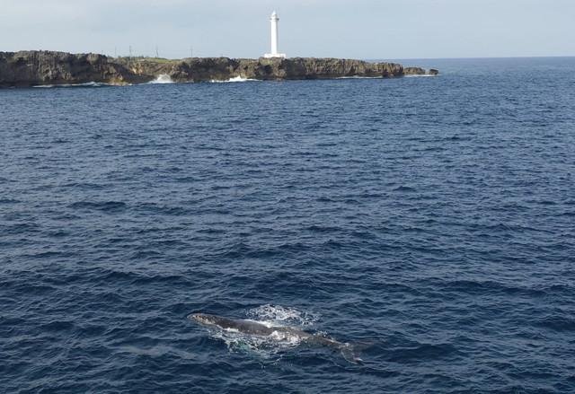 残波岬海岸のクジラ