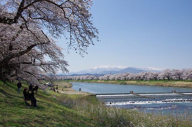 大河原町一目千本桜
