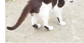 山頂駅の猫