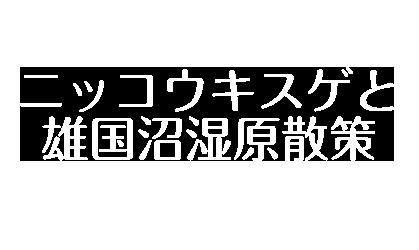 〜日本一の生息株数の絶景を〜ニッコウスキスゲと雄国沼湿原散策